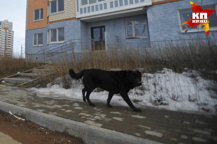 ВБрянске навойну сбродячими собаками истратят 1,9 млн руб.