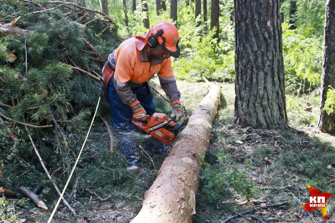 Депутат, нелегально вырубивший лес на1,5 млн руб., получил штраф