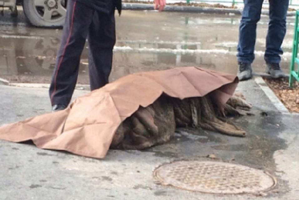 ВТюмени вканализационном колодце отыскали тело мужчины