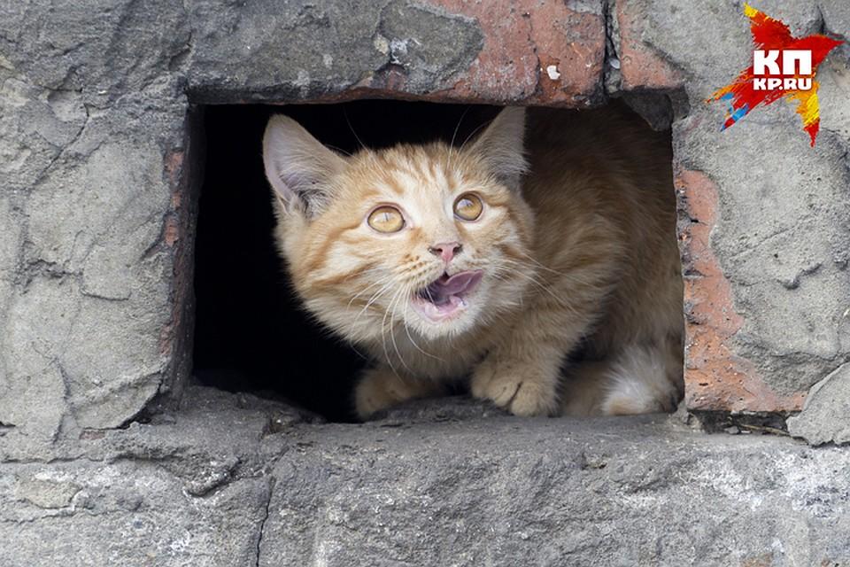 Бездомные животные загод покусали 2,7 тысячи граждан Ленобласти