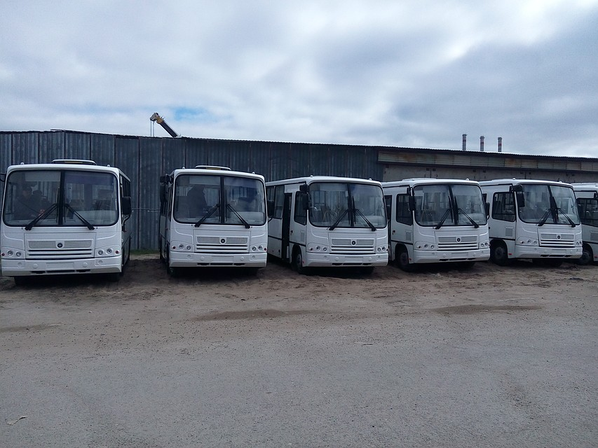 ВВолгограде налинии выпустят 30 автобусов средней вместимости «ПАЗ»