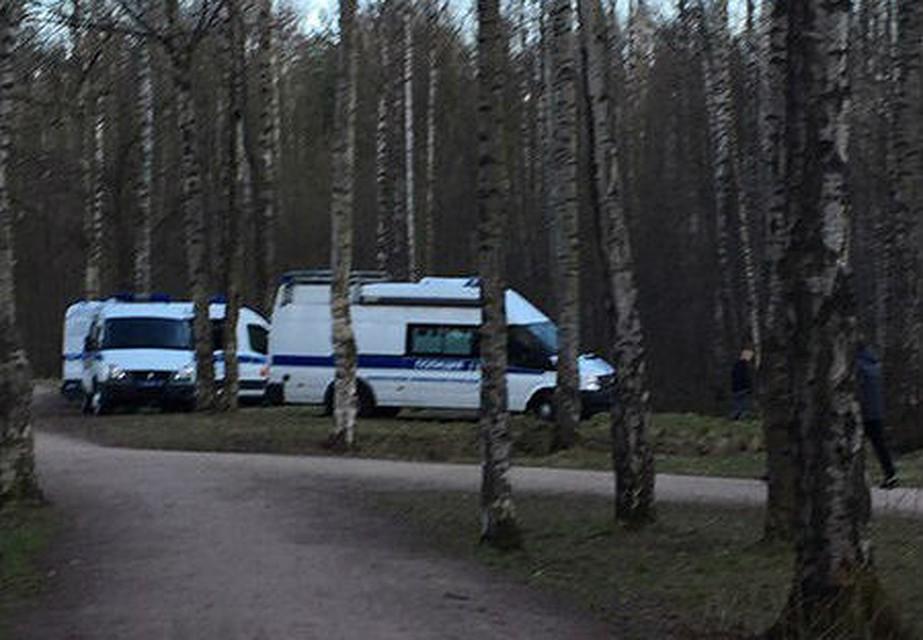 Впетербургском парке Сосновка отыскали труп голой женщины