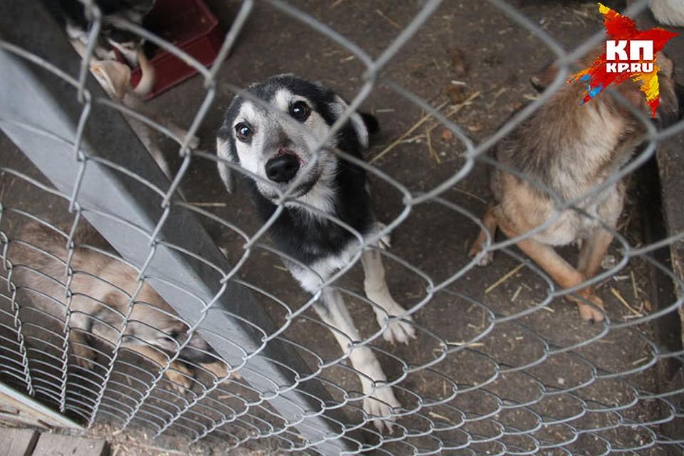 Полмиллиона руб. штрафа заплатит ООО«ЭБС» за«концлагерь для собак»