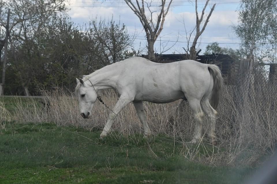 ВБашкирии хулиганы разрисовали лошадь машинной краской