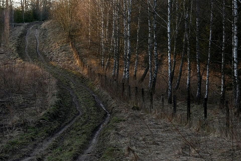 Литва начала строительство забора награнице сРоссией