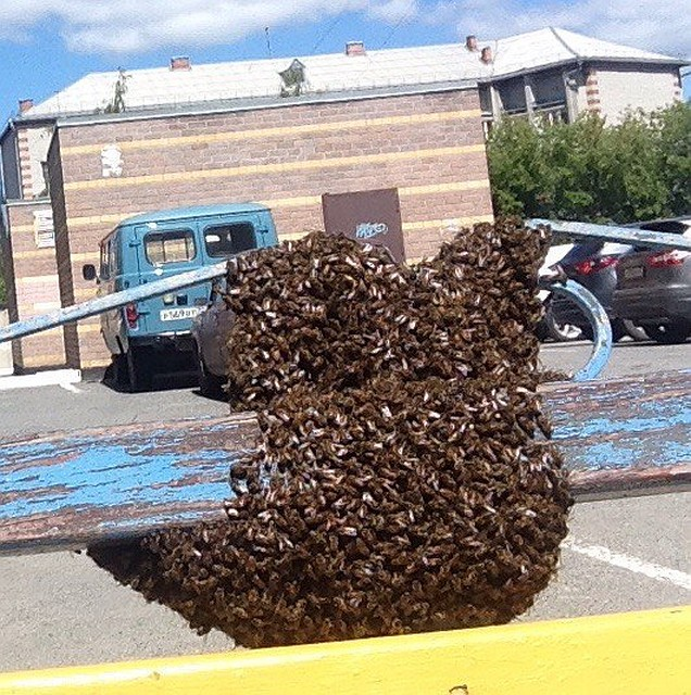 Рой пчёл захватил детскую площадку вТюмени