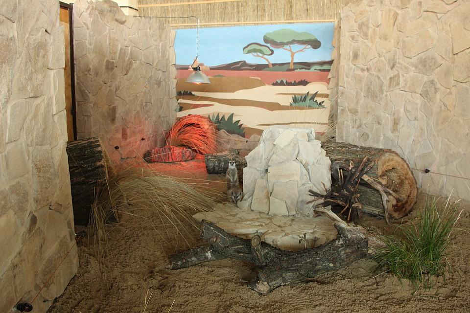 Сурикатов калининградского зоопарка переселили вновый вольер