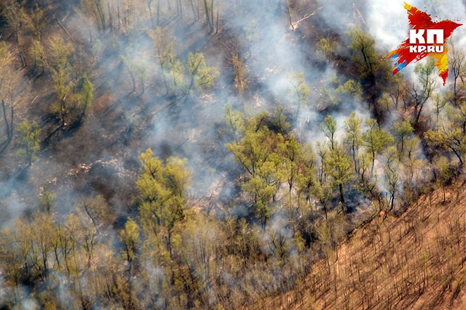 Число лесных пожаров наЯмале засутки возросло до 9-ти