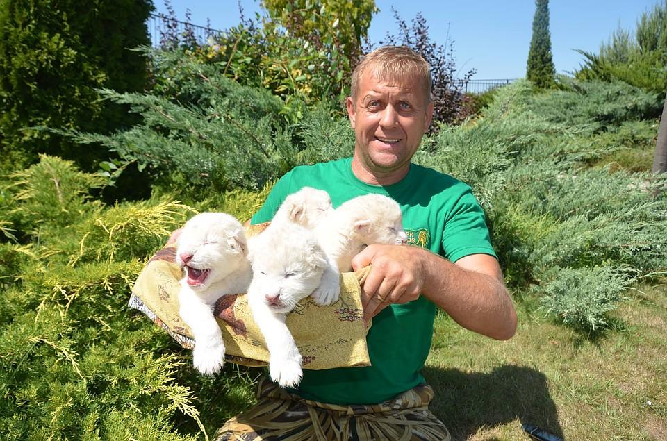 Всафари-парке родились белые львята, которым дали «няшные» имена