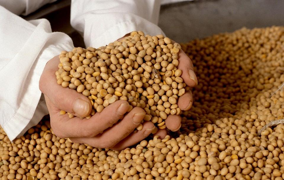 ВБогородицком районе полицейские раскрыли хищение сои на млн руб.