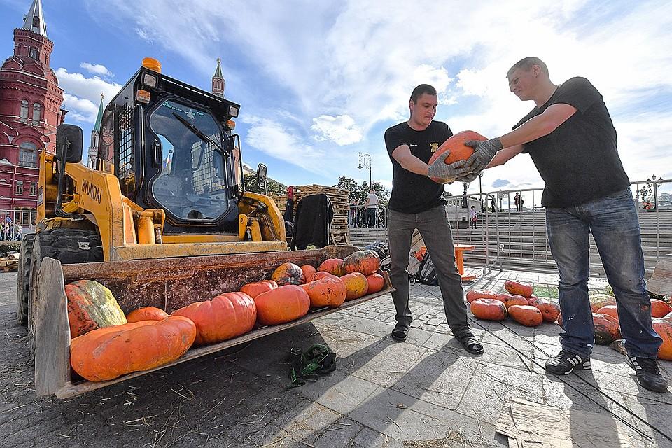 ВМоскву привезли 100 тонн тыквы для фестиваля «Золотая осень»
