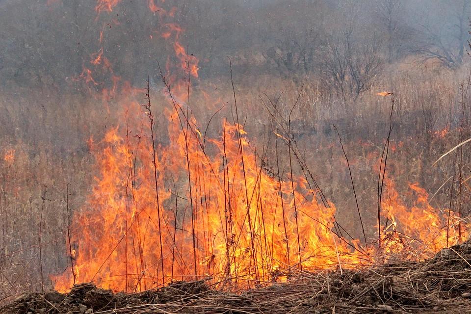 ВПриморье действует 14 лесных пожаров