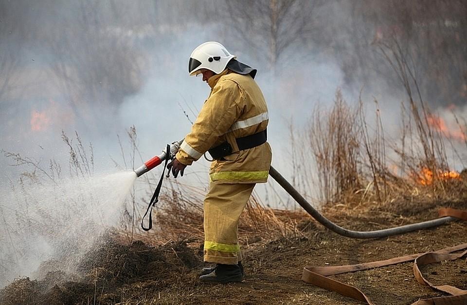 Сократилась площадь лесных пожаров вПриморье