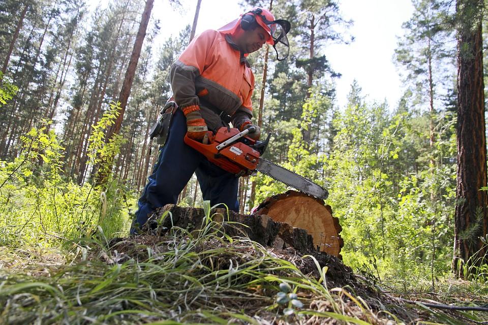 Деревья на860 тыс. руб. нелегально вырубили вЧелябинске