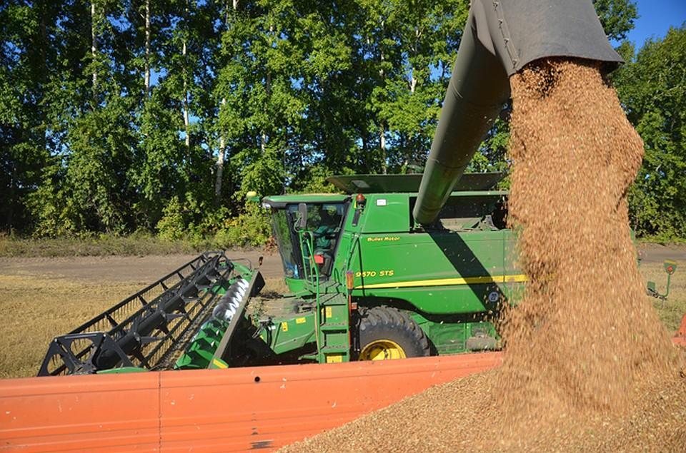 Объемы отгрузки зерна возросла в2,5 раза вНовосибирской области
