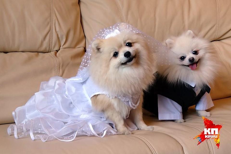 Ужительницы Ленобласти измашины украли дорогую собаку