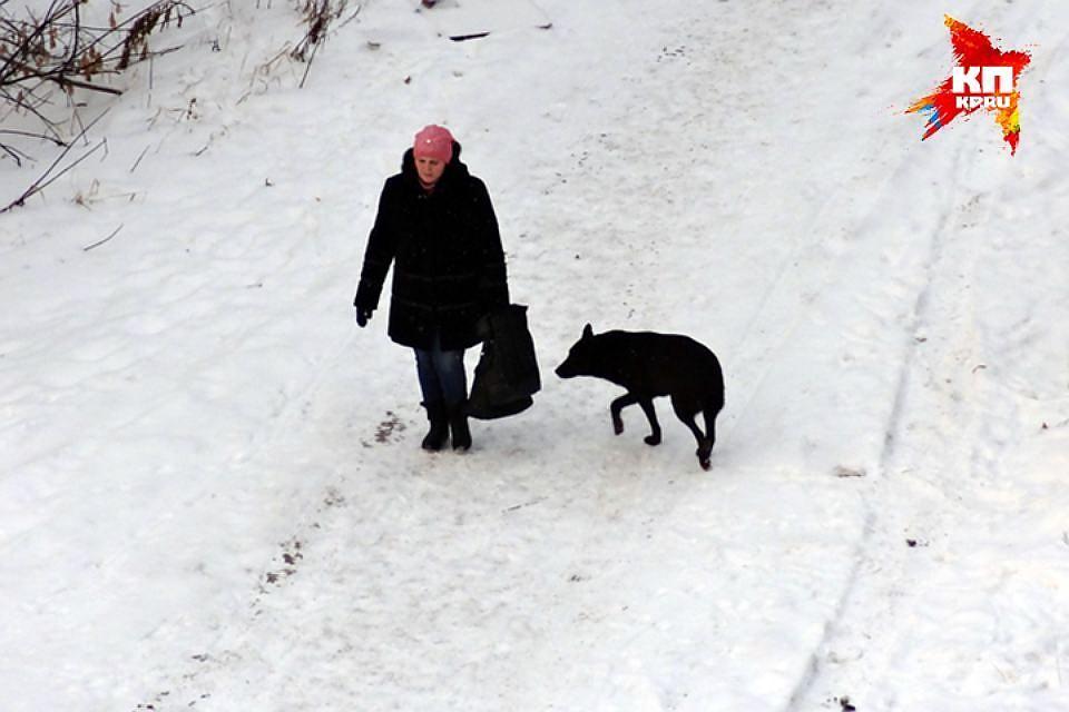 Пострадавшая отсобаки жительница Верещагино отсудила компенсацию