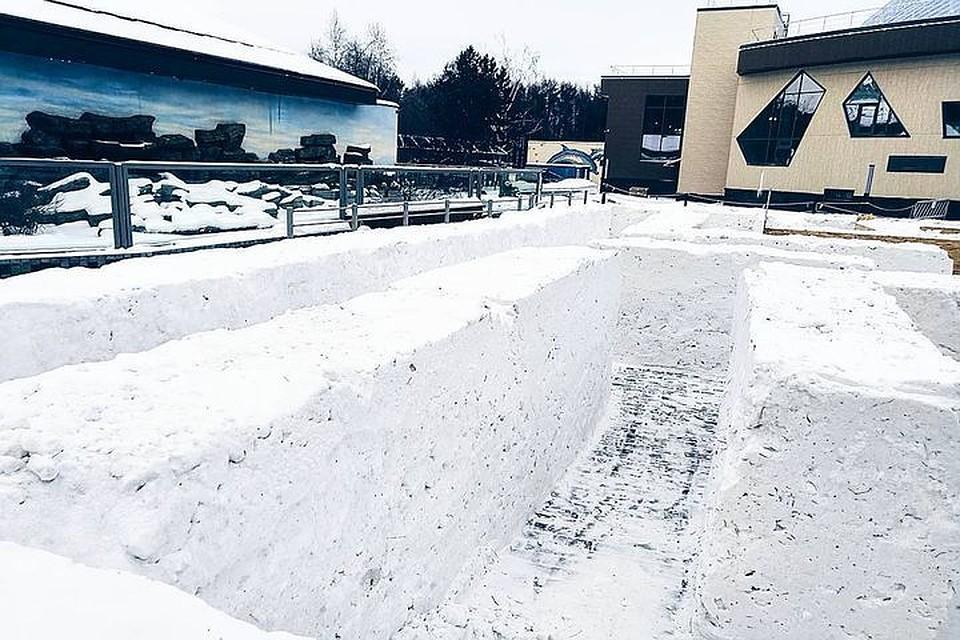 Раскрасить снежный лабиринт ипоиграть вснежки зовут вновосибирский зоопарк