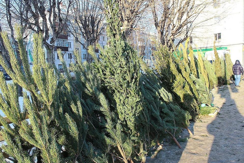 С10января вКазани заработает пункт приема живых новогодних елок