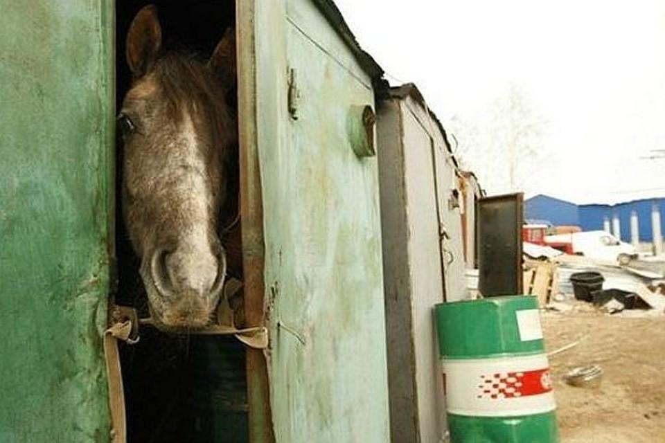 ВХабаровском крае мать сдетьми поселилась вприюте для животных