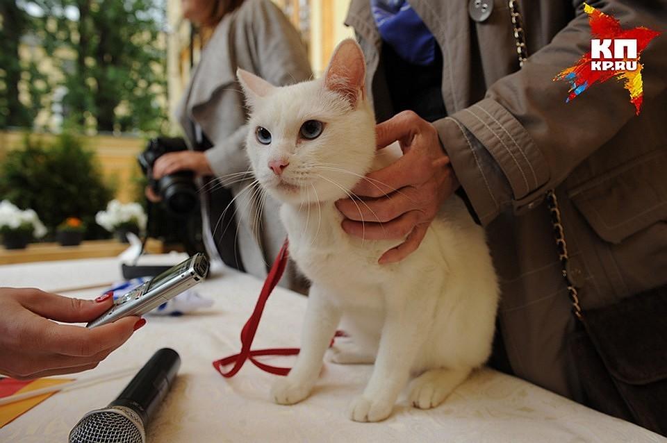 КЧМ-2018 вПетербурге появятся коты-футболисты