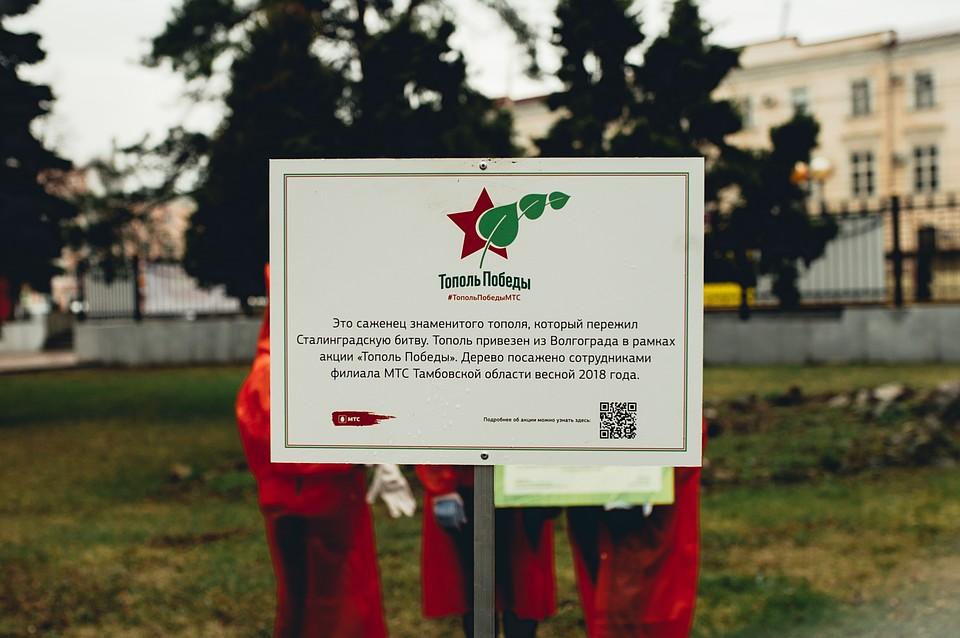 Росток знаменитого «Тополя Победы» посадили вОренбурге