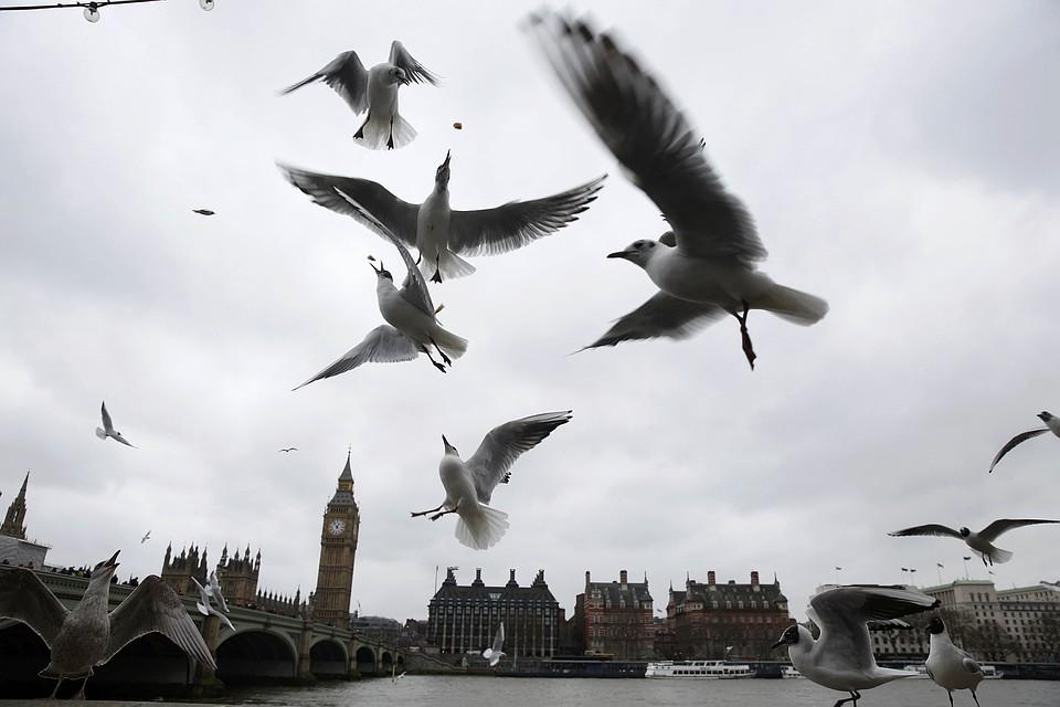 Англия заблокировала заключение соглашения сРоссией овзаимном признании документов обобразовании