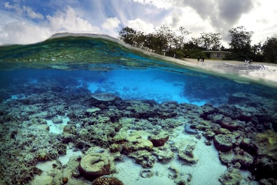 Австралия направит $500 млн назащиту огромного барьерного рифа