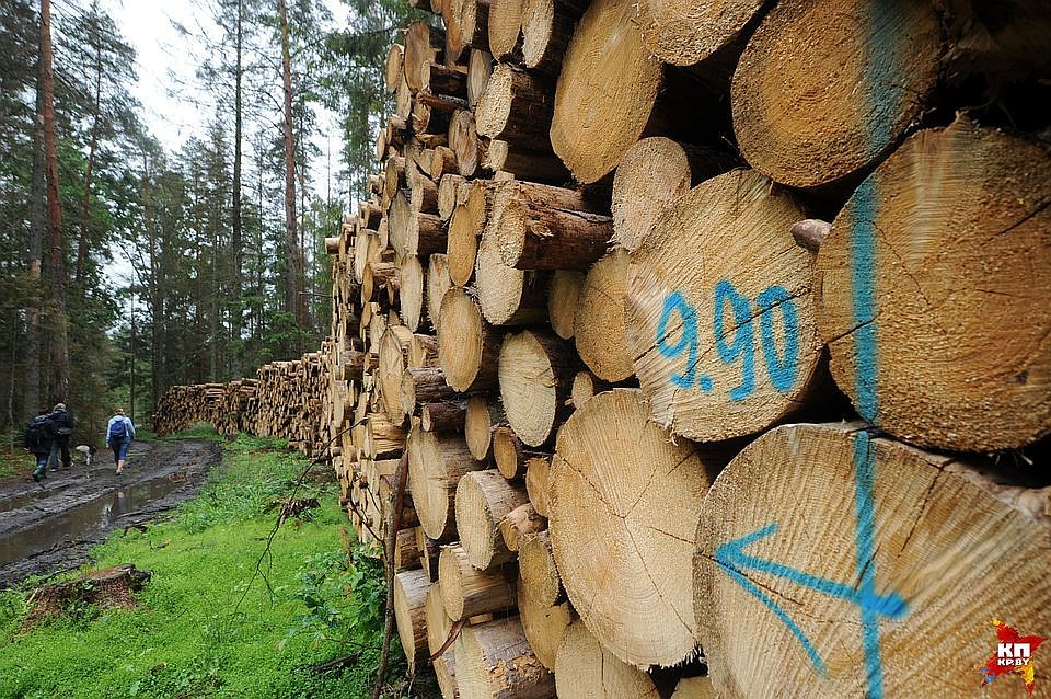 Госдума приняла формулу обязательного восстановления: за1 гектар вырубок— 1 гектар лесовосстановления