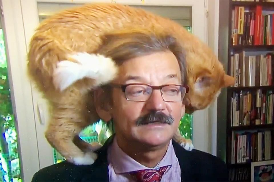 ВПольше винтервью историка вмешался кот