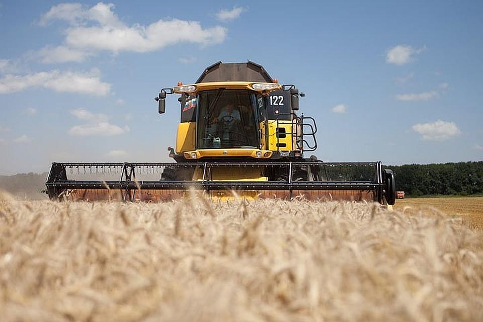 Гидрометцентр предсказывает снижение урожая зерновых