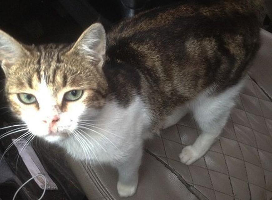 Тульские осужденные науськали кота таскать вколонию наркотики