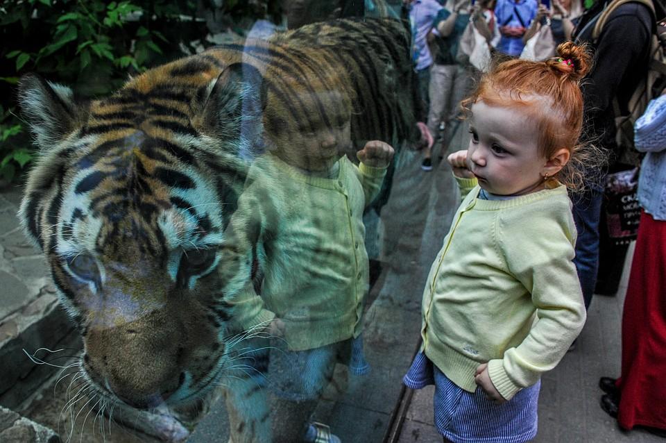 Московский зоопарк продлил летний режим работы до15сентября