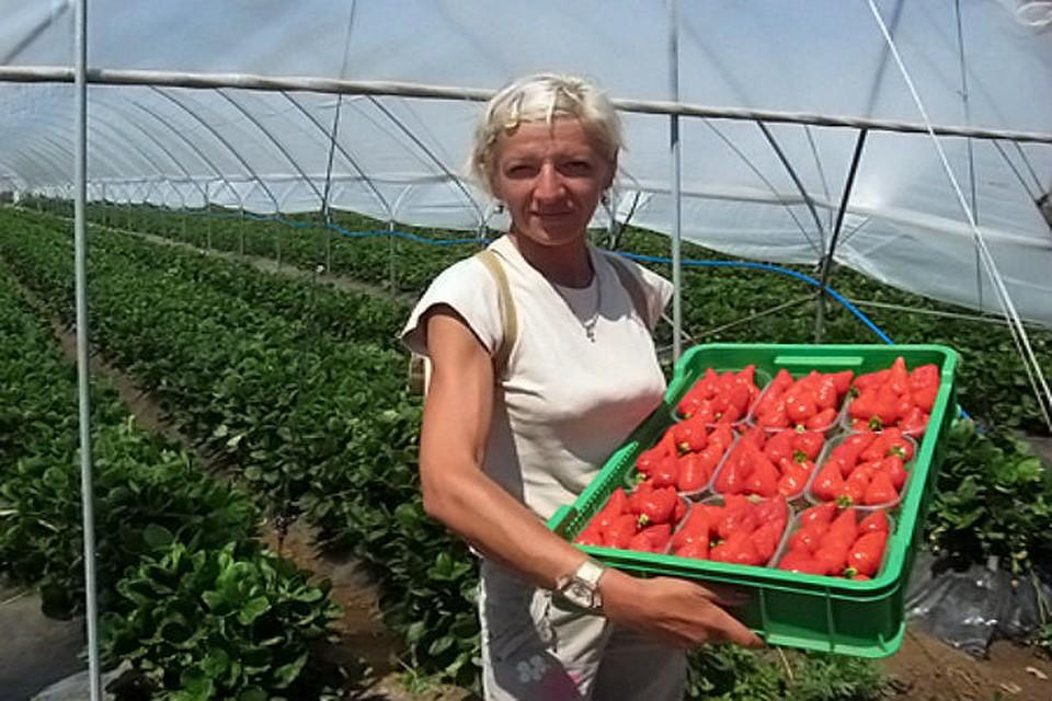 Бизнес по выращиванию вишни 52