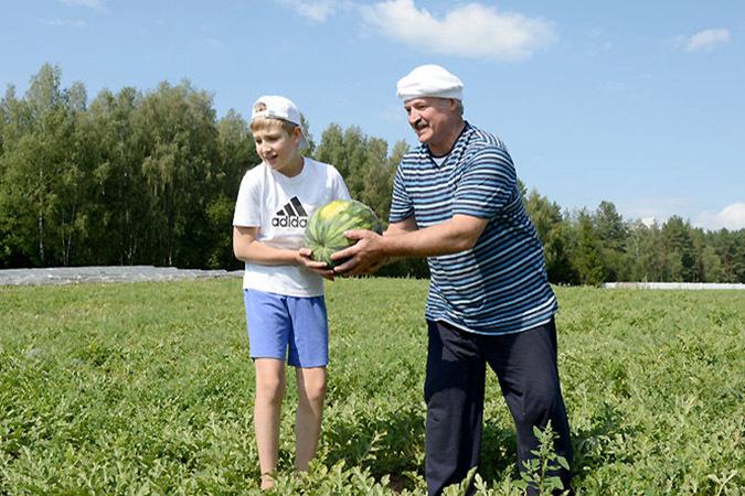 Александр Лукашенко с сыном Колей собирают урожай арбузов и дынь. Фото: president.gov.by