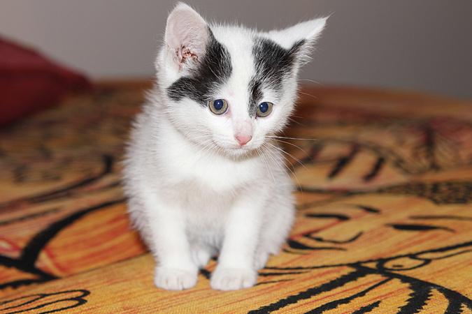 Появилась информация, что идет серьезная работа над уникальной вакциной, которая будет вводиться кошкам