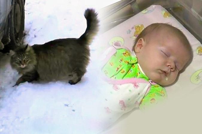 В Подмосковье кошка несколько часов согревала малыша, подброшенного в подъезд. Фото: Телеканал 360