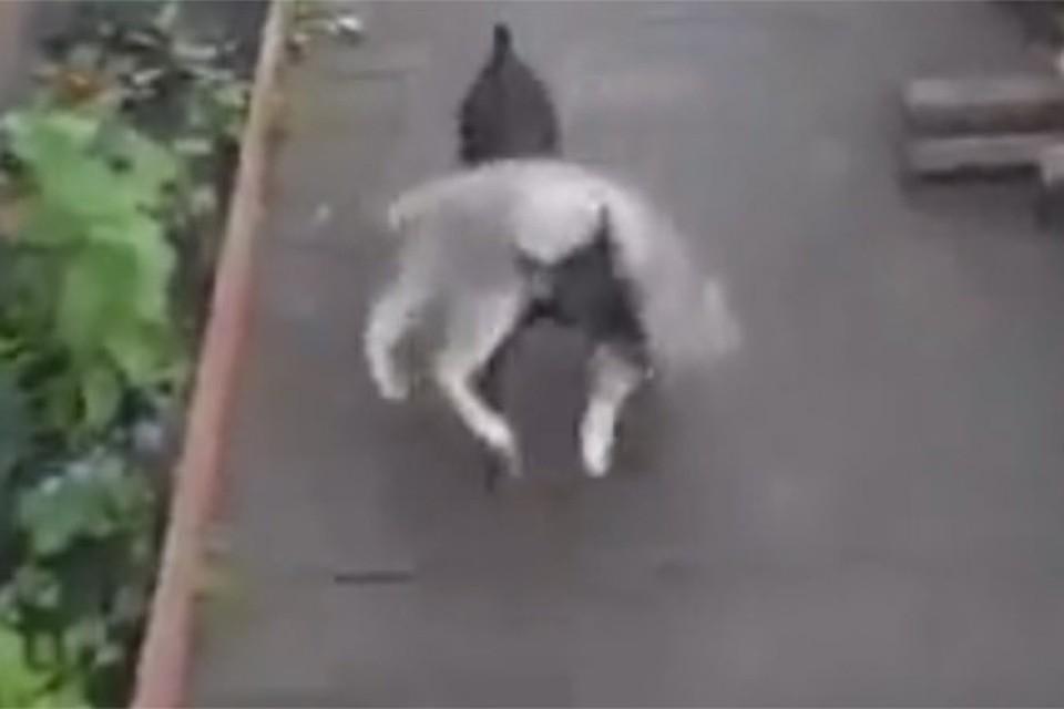 Собака, несущая непослушного кота домой, покорила соцсети