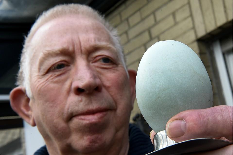 Государственный музей естествознания в Брауншвейге просит у фермеров Майне разрешения выставить это яйцо в качестве экспоната. Фото: Holger Hollemann/DPA/TASS