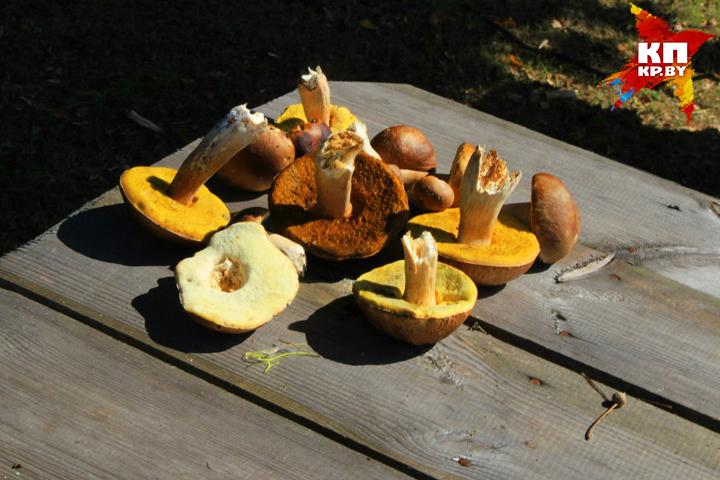 Белорусы ищут грибы-ягоды, а спасатели - грибников-ягодников