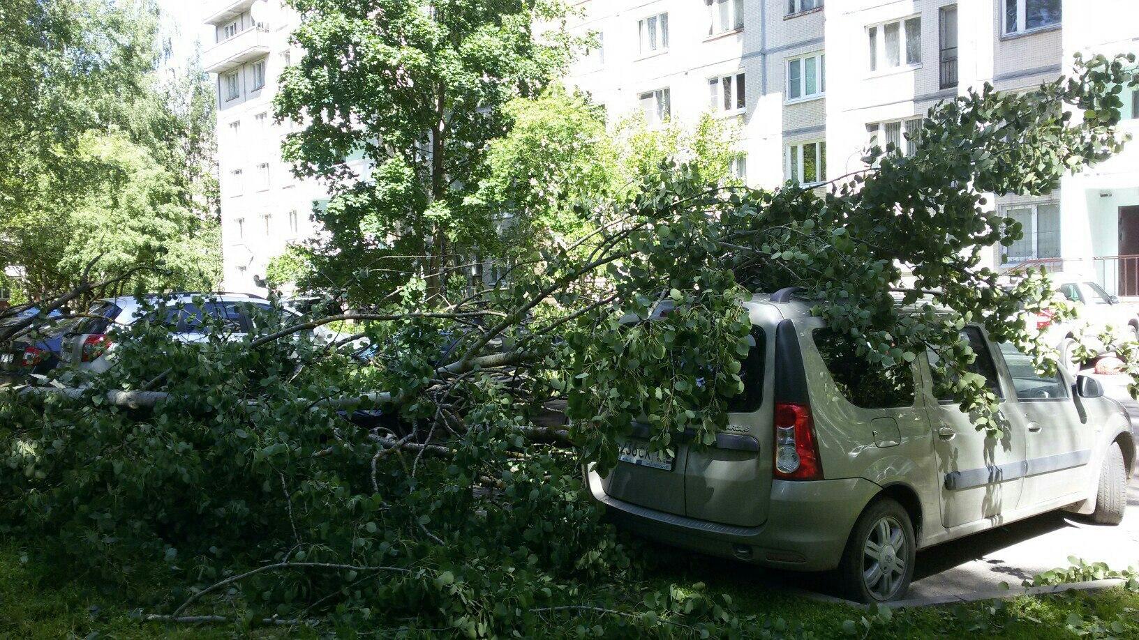 В выходные деревья падали более 200 раз