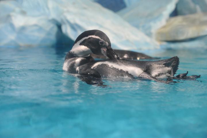 Многочисленные попытки найти внеземную или древнюю жизнь в Антарктиде не увенчались успехом. Одни пингвины попадались.
