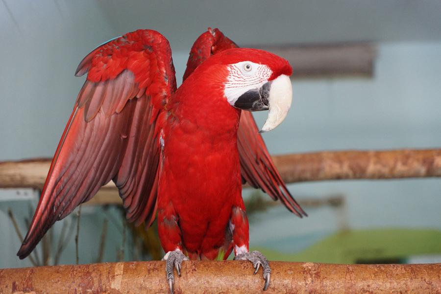 Подозрительный мужчина наЧМЗ заталкивал детей вмашину, чтобы показать попугая