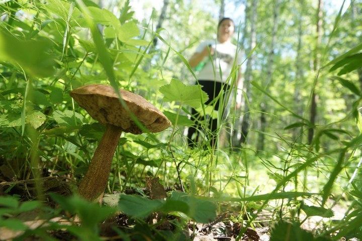 Женщина иребенок пропали при сборе грибов втайге Иркутской области