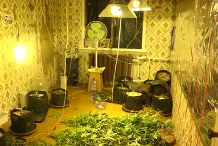 ВКазани полицейские задержали двоих мужчин, которые выращивали марихуану вквартире