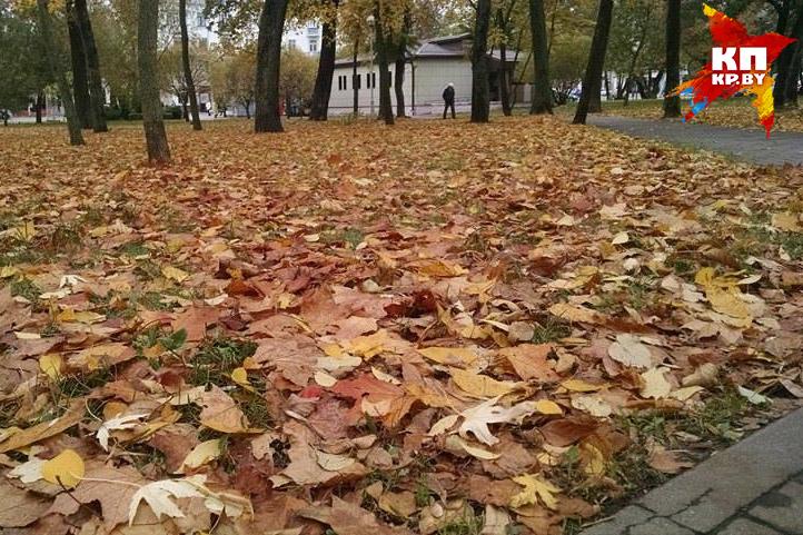 Дворы, парки и скверы накрыли разноцветные ковры