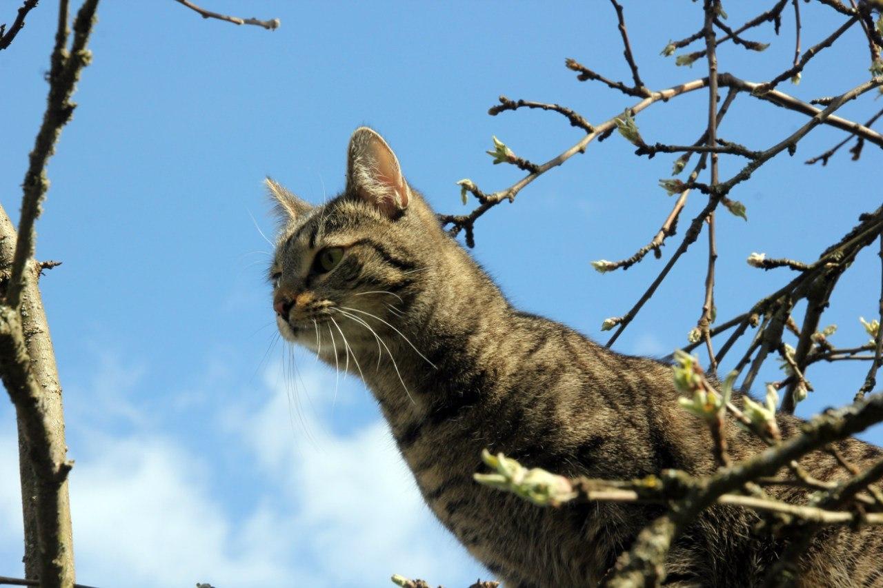"""В Петербурге разработали программу доступного жилья для усатых-полосатых. ФОТО: """"Республика кошек""""."""