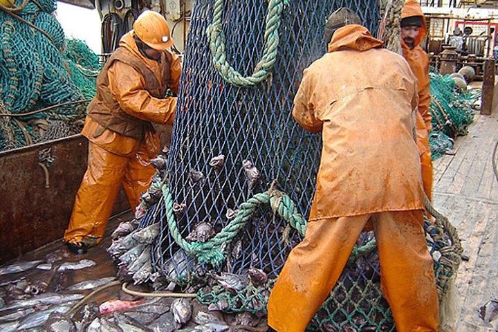 Норвегия и Россия договорятся о квотах на вылов рыбы. Фото: с сайта murmansk.fishretail.ru