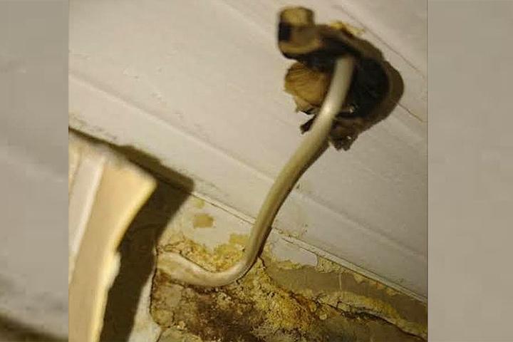 В квартире москвичей из-под потолка вырос гриб.
