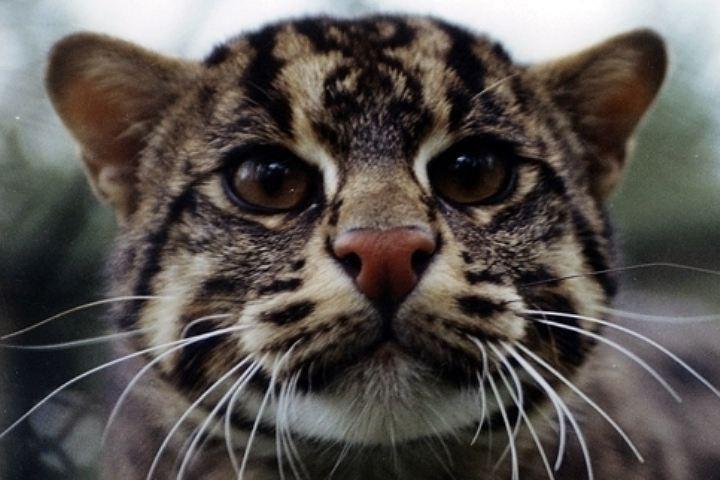 ВНовосибирск привезли американского кота-рыболова